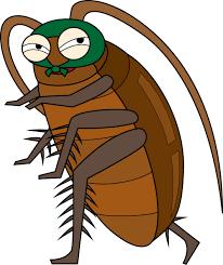 フィリピンで出会うゴキブリ