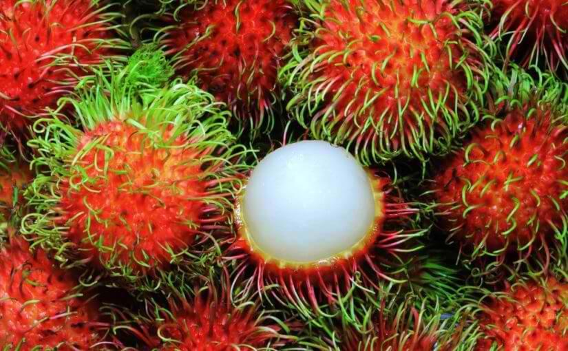 フィリピンで食べておきたいフルーツ