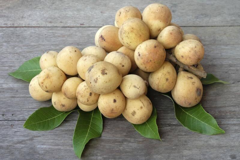 ランサ 南国フルーツ