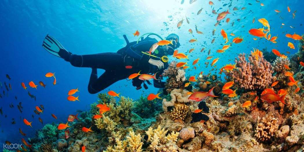 フィリピン観光の目的