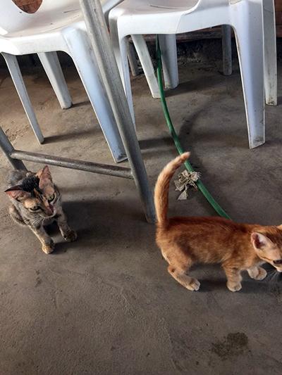 市場に集まる子猫達