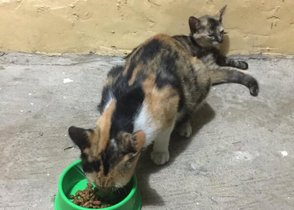 フィリピンで野良ネコにひっかかれた際の対処法