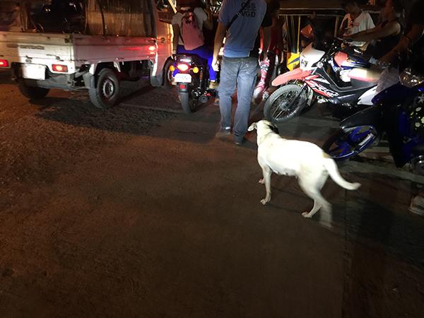 フィリピンで野良犬に遭遇した際の注意点