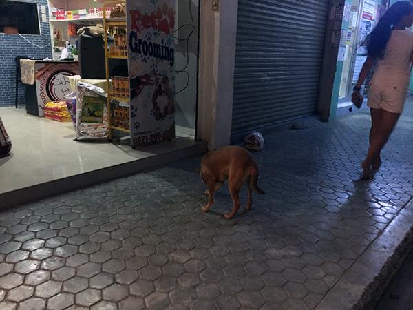狂犬病の潜伏期間