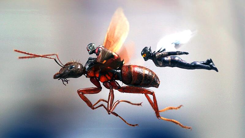 蟻被害の予防と対策